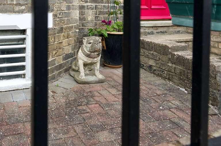 ornamental dog